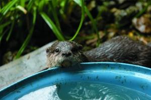 31-0817Z Otter