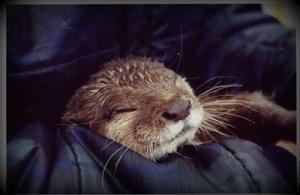 Dphne Neville's otter