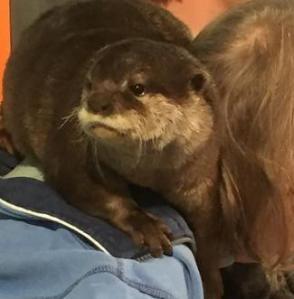 Rudi the Otter